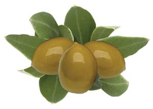 Olive Fruit Image 300pix